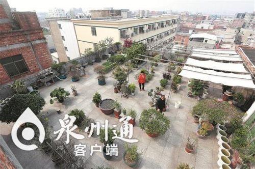 泉州一82岁老人精心把自家天台打造成了空中花园